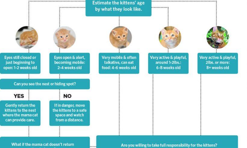 Kitten Season – a Helpful Guide