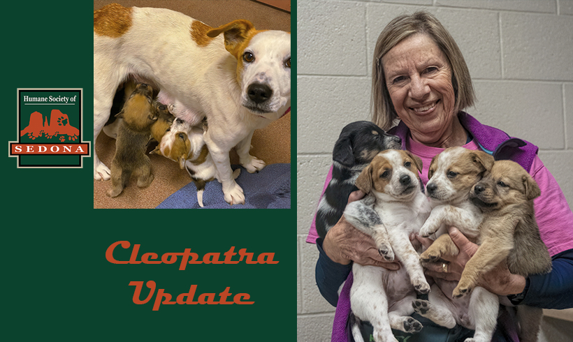 Cleopatra and Her 8 Pups Progressing Nicely