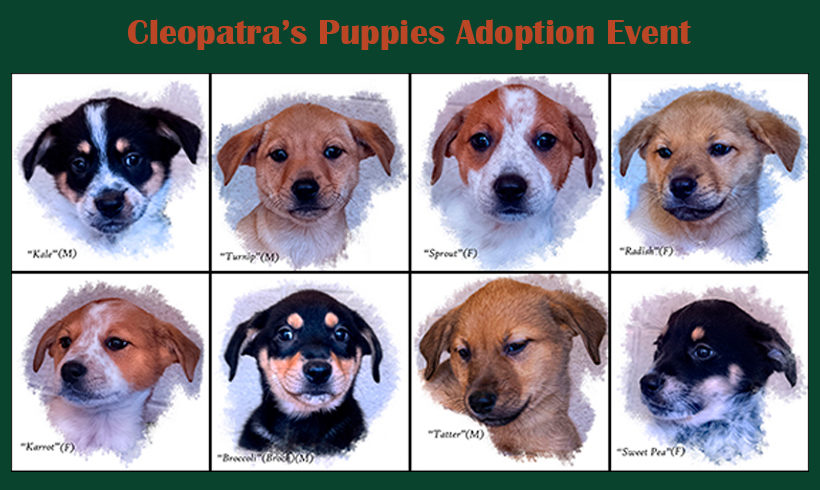 Press Release:  Cleopatra's Puppies Ready for Adoption