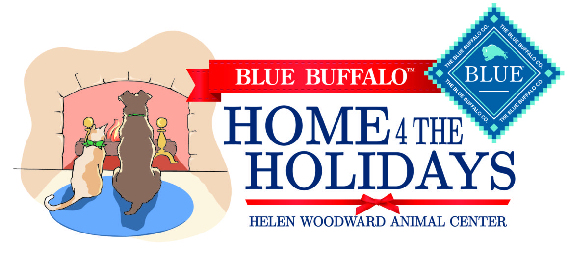 Humane Society of Sedona Teams Up with Home 4 the Holidays to Help Find Homes for Orphan Pets