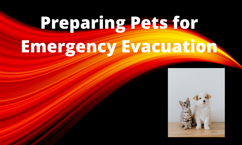 Preparing Pets for Emergency Evacuation